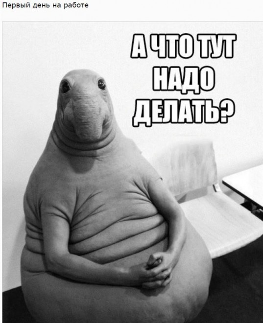 Знакомьтесь, Ждун: 15 убойных мемов от интернет остряков