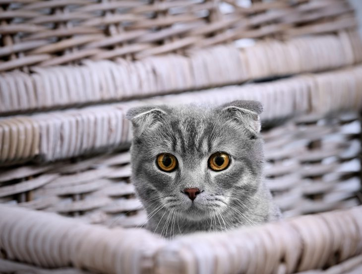 Грамотный маркетинг: как Рабинович кошку продавал