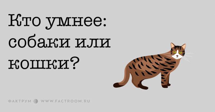 Кто умнее: собаки или кошки?