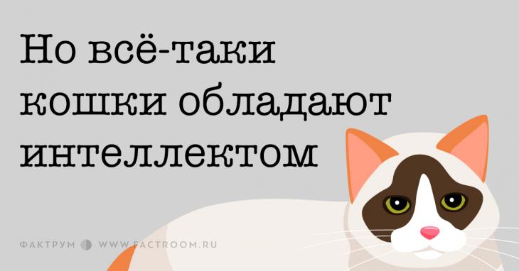 Новсё-таки кошки обладают интеллектом