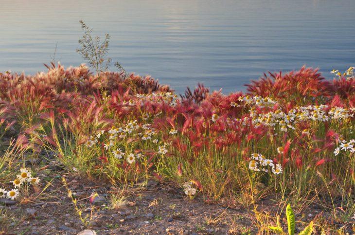Берег моря Лаптевых восхитительно красив вэто время года