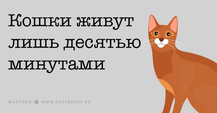 Кошки живут лишь десятью минутами
