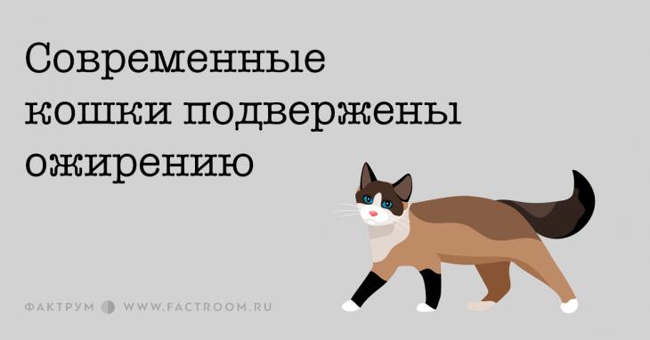 Современные кошки подвержены ожирению