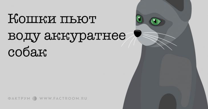 Кошки пьют воду аккуратнее собак