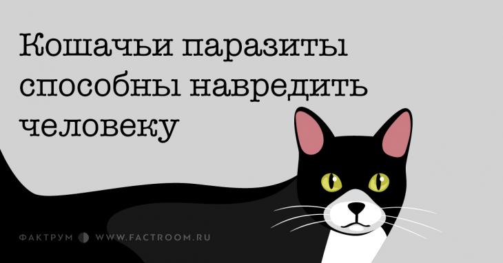 Кошачьи паразиты способны навредить человеку
