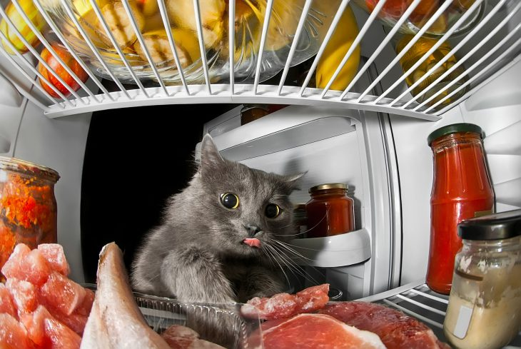 Звёздный час кота обжоры