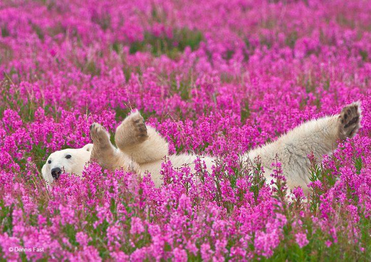 Медведи в цветах
