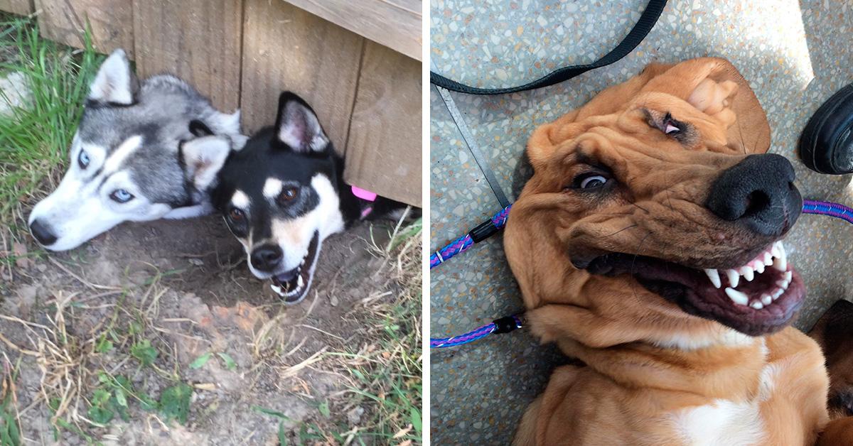 20 фотографий забавных пёсиков, вызывающих умиление иулыбку
