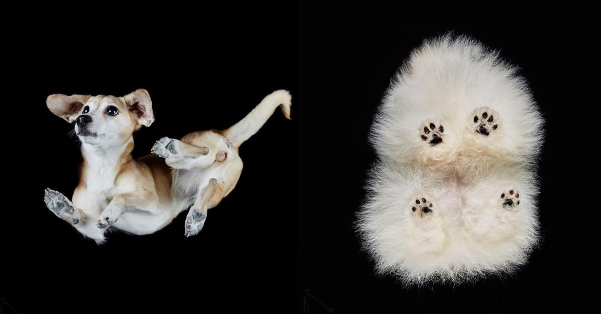Спорим, выещё невидели собак втаком ракурсе?