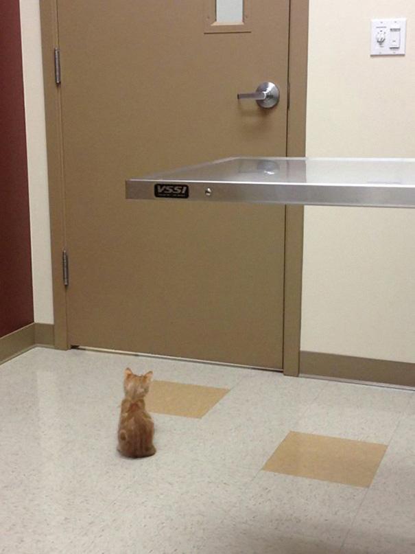 Эти коты твёрдо решили ни за что на свете не идти к ветеринару