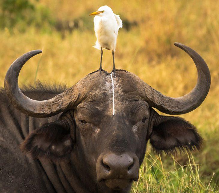 Глядя наэти фотографии диких животных, нельзя неулыбнуться