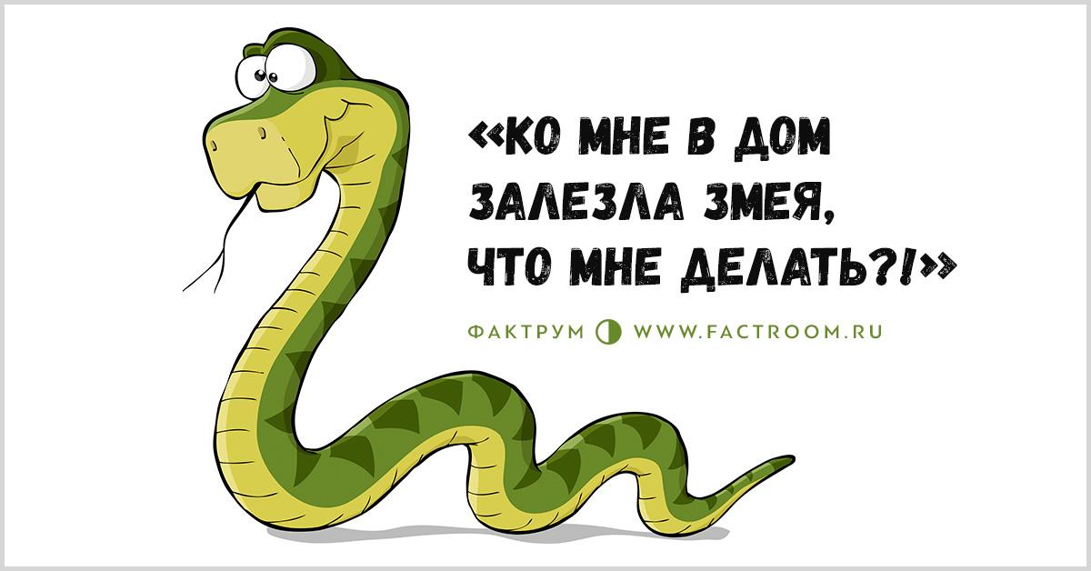 Картинки про змей с надписями, осени
