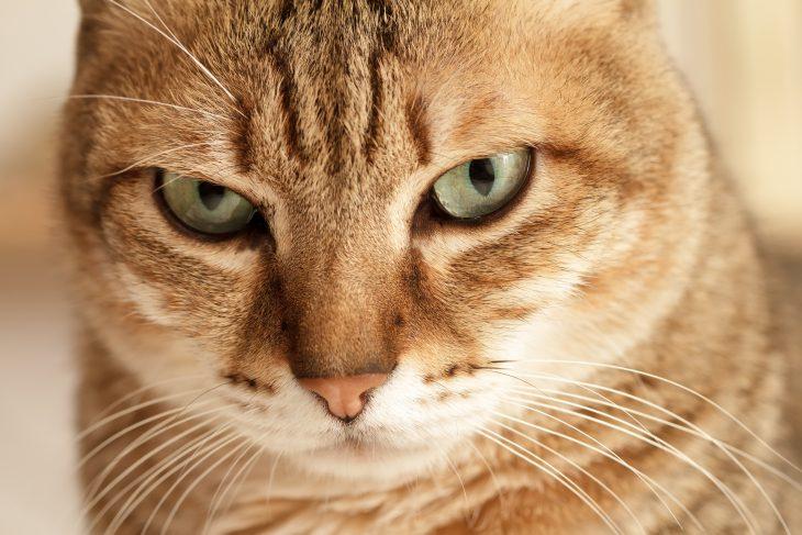 «Катя, что то с нашим котом! Он ходить не может!»