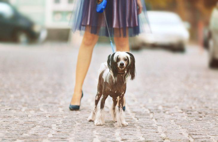 Гуляет дама с собачкой, атут из за угла гигантский рыжий кот…