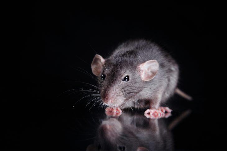 Стою наостановке ивдруг слышу женский вопль: «Крыса!»
