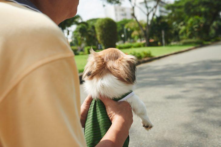Дедушка выгуливает крохотную собачонку, атутак итянет кгигантской овчарке…