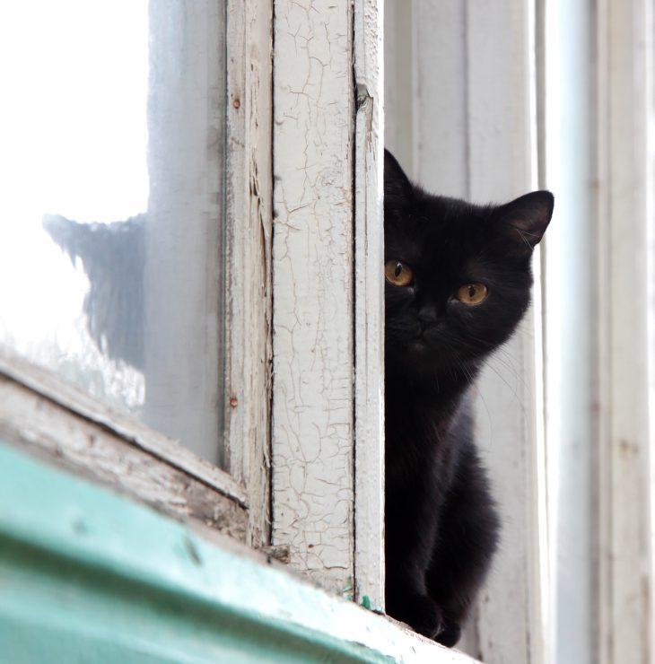 Вышел набалкон изаметил вокне напротив большого чёрного кота…