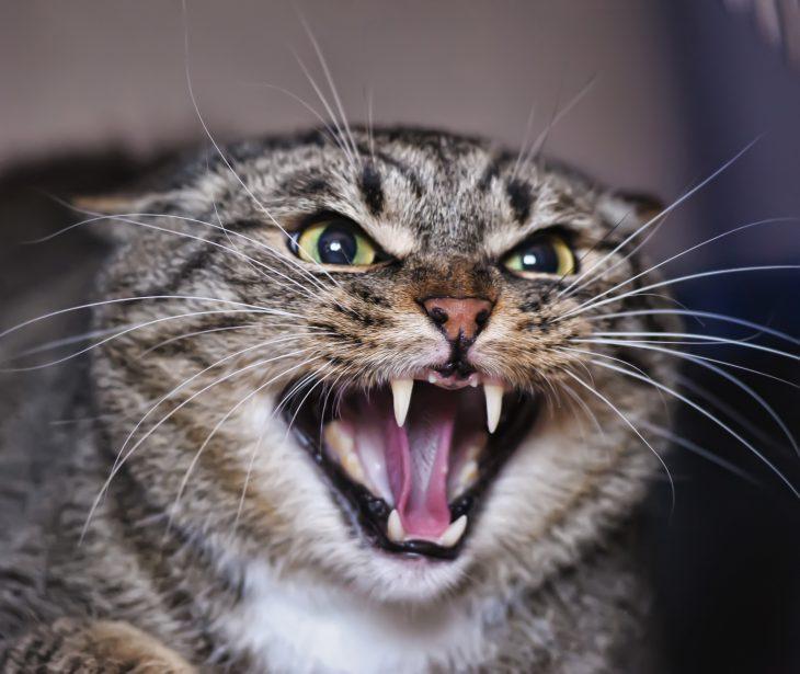 Как муж кота из под дивана тащил