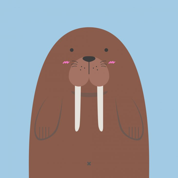 Поймали чукчи огромного моржа итащат домой. Мимо идёт геолог...