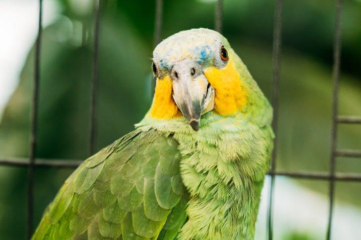 Искренне ненавижу своего попугая…