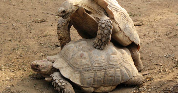 Глупые черепахи