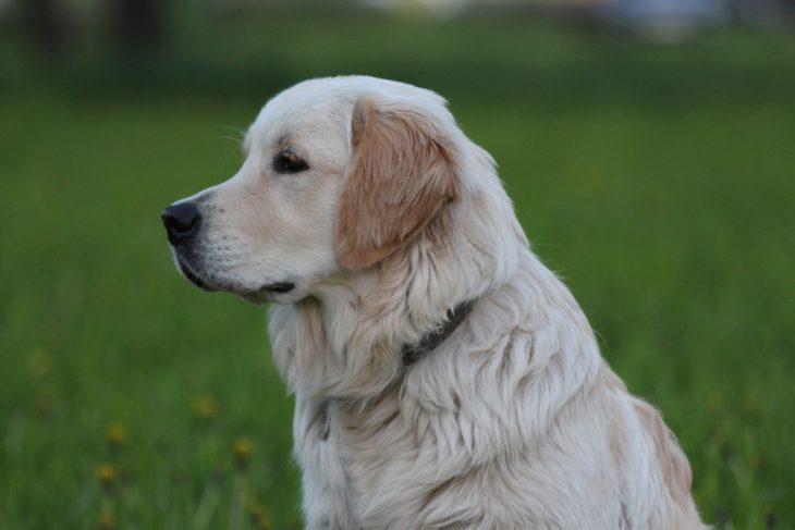 Умный пёс