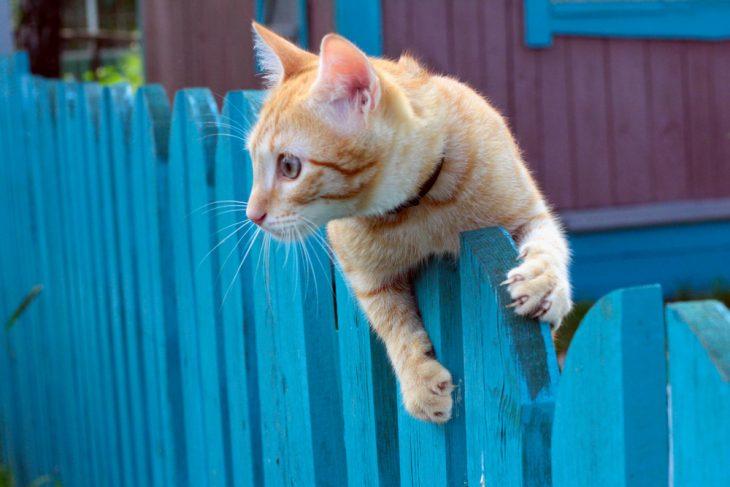 Пьяному ничего нестрашно, даже если тыпростой дачный кот
