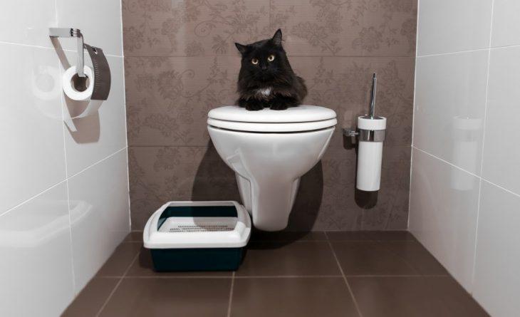 Кот наунитазе