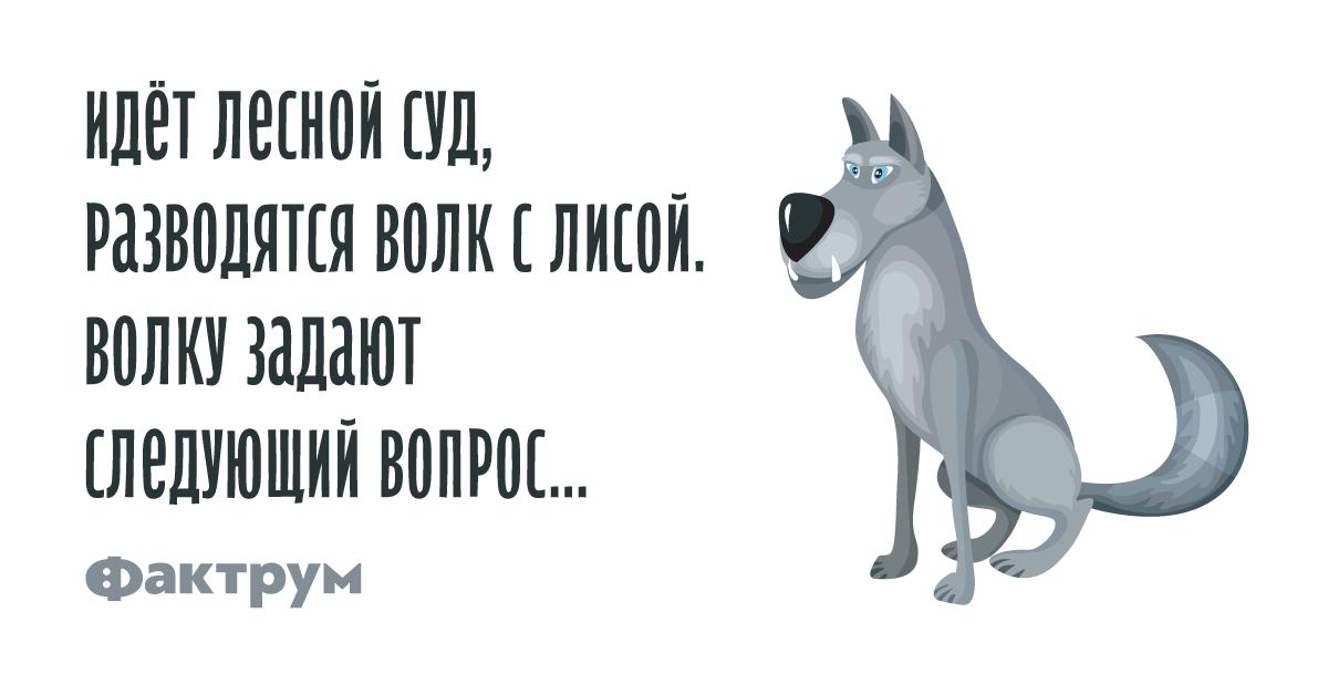 Анекдот про то, как волк слисой разводились