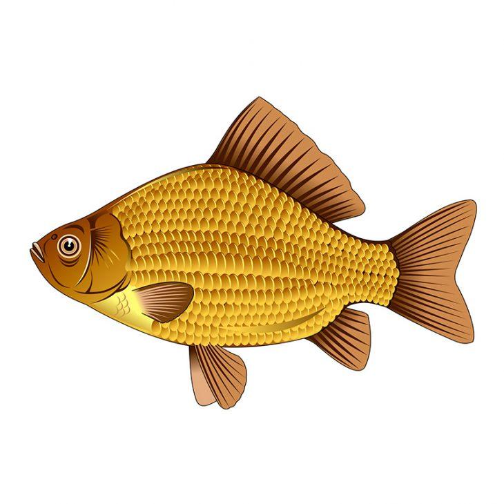 Анекдот про то, как карась привлекал внимание рыбаков