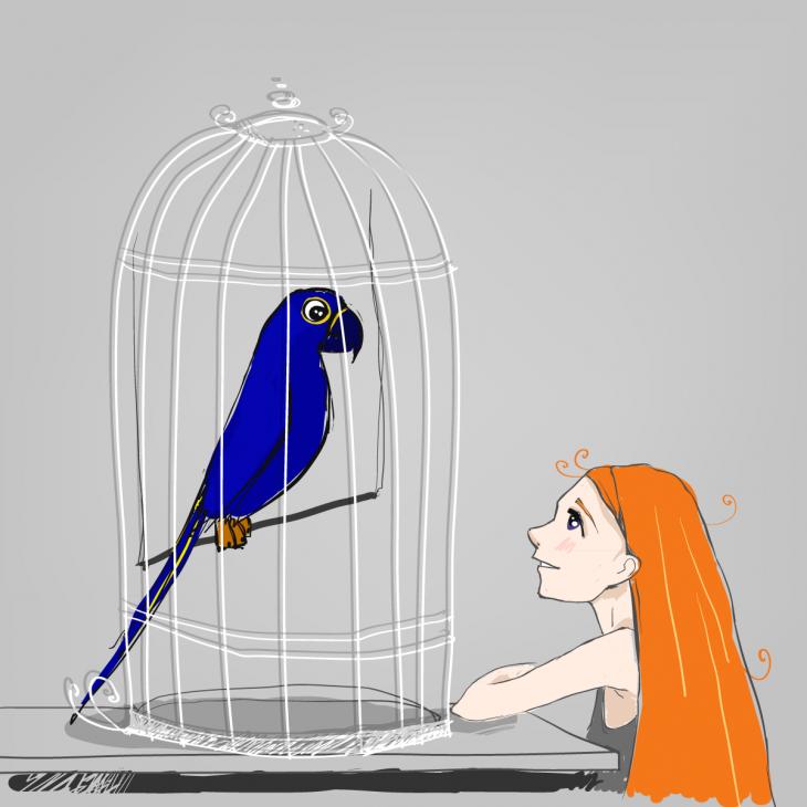 Анекдот о говорящем попугае, который нахамил покупательнице