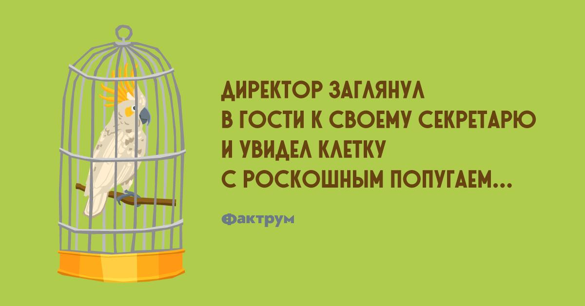 Анекдот про директора, оскорблённого фразой глупого попугая