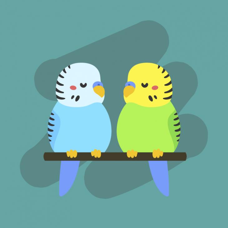 Говорящие попугаи.