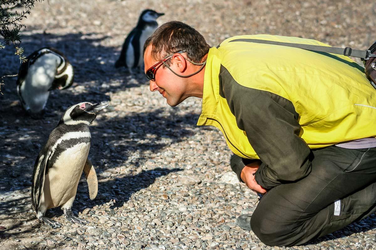 Профессия: переворачиватель пингвинов