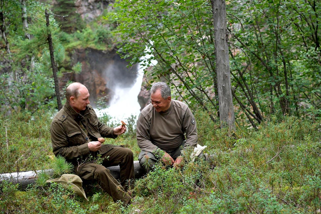 Путин и Шойгу собирают грибы