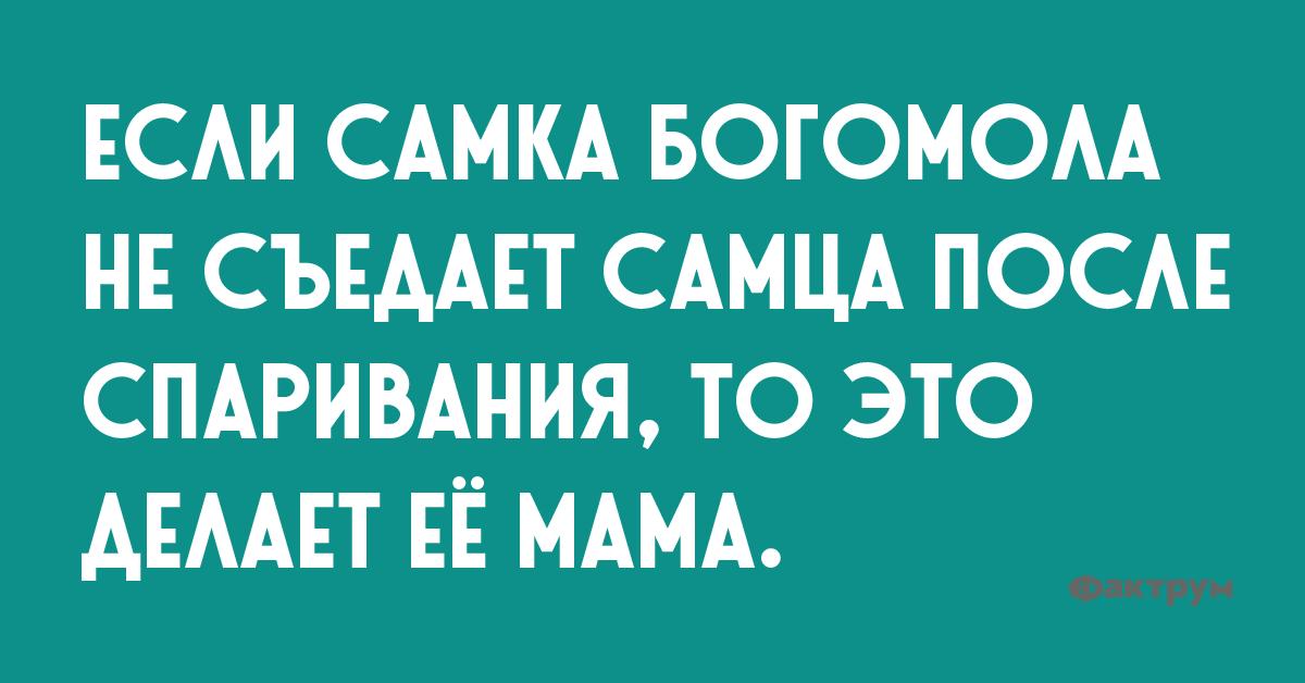 Если самка богомола не съедает самца после спаривания, то это делает её мама.