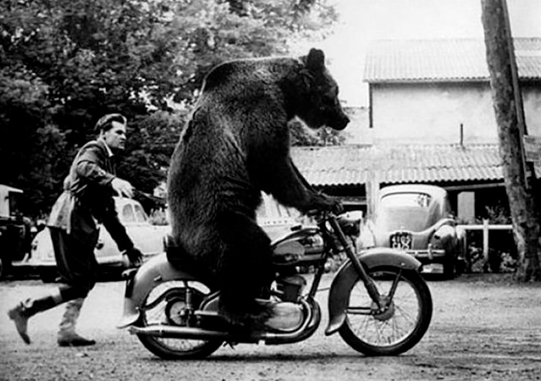 Единственная в мире медведица с водительскими правами