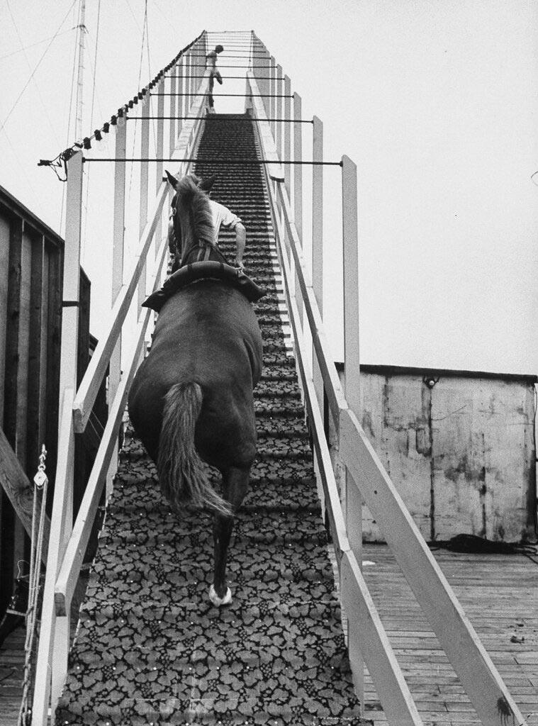 Конь поднимается на вышку для совершения прыжка