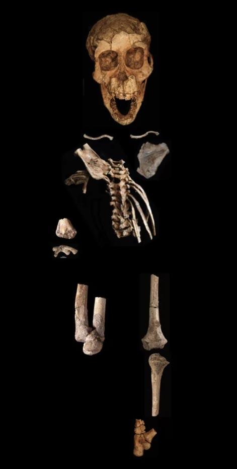 Кости австралопитека