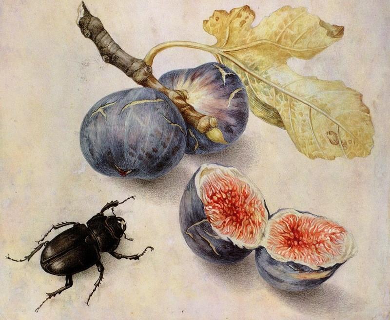 Картина Джованни Гарцони «Инжир и жук»