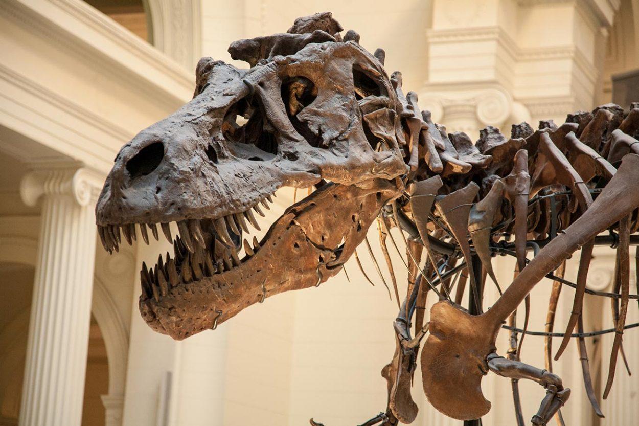 Cкелет динозавра