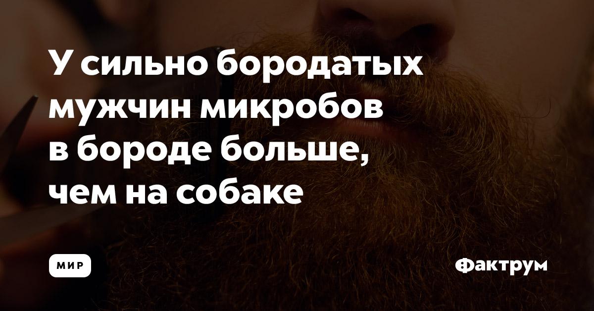 Усильно бородатых мужчин микробов вбороде больше, чемнасобаке