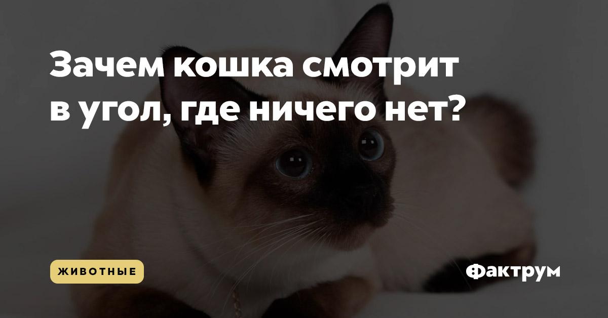 Зачем кошка смотрит вугол, где ничего нет?