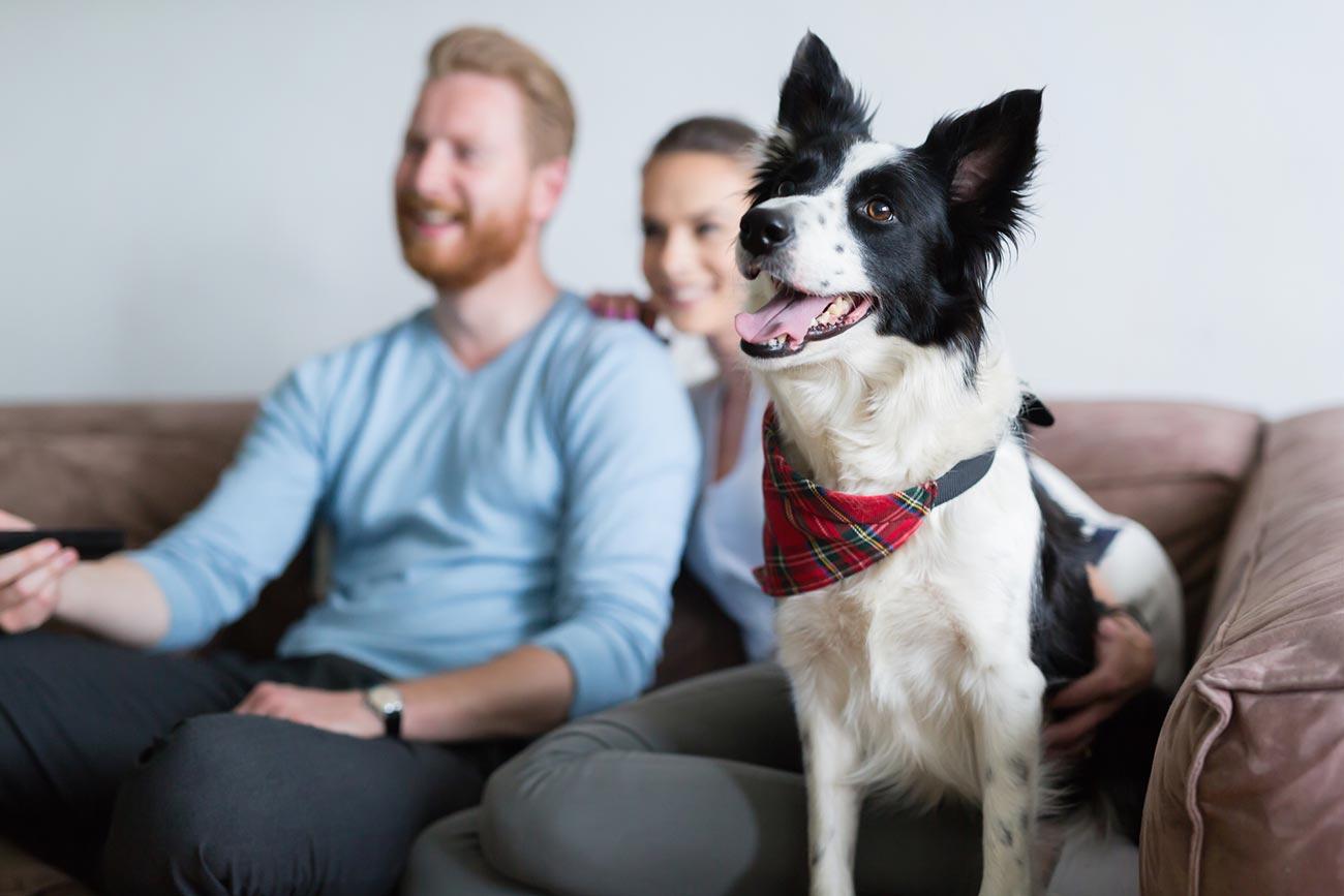 Что видит собака, когда смотрит телевизор?