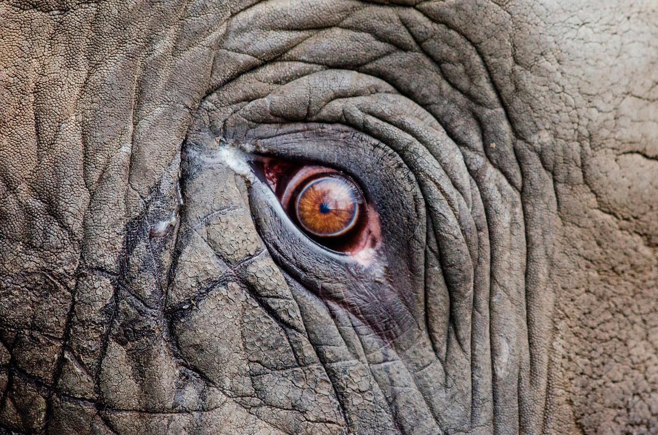 Говорящий слон Батыр изкарагандинского зоопарка любил материться