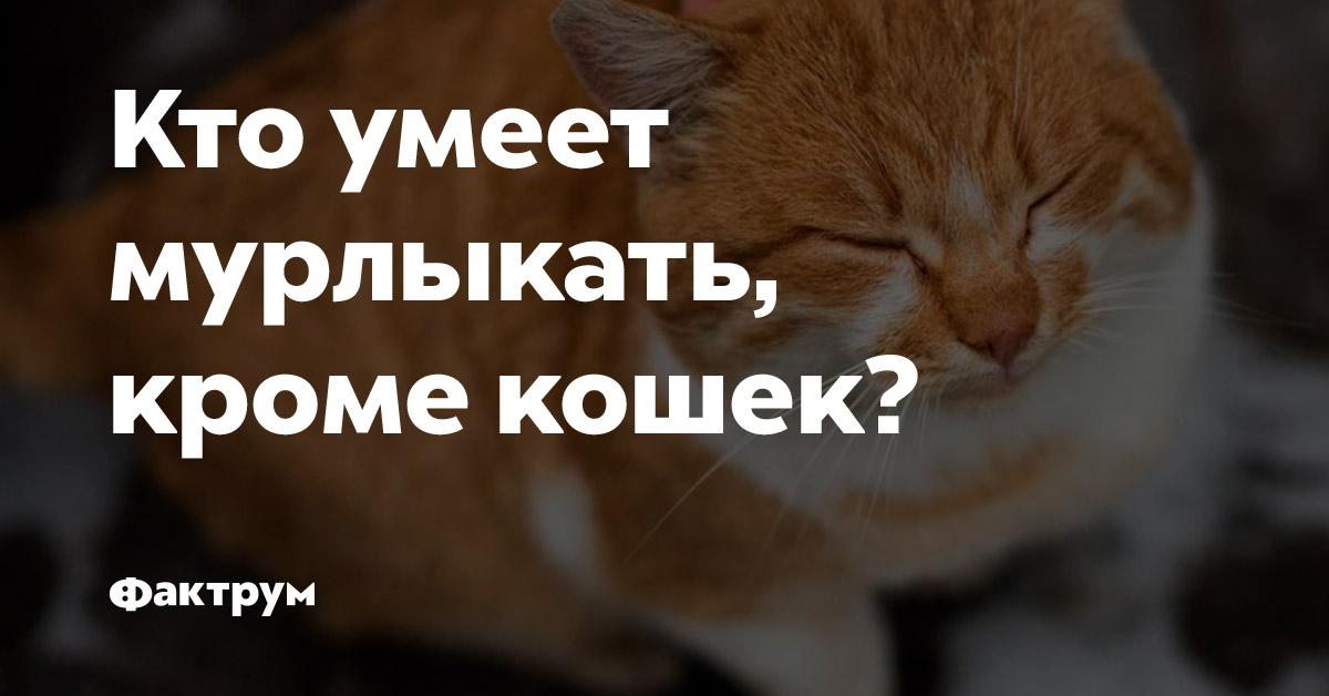 Кто умеет мурлыкать, кроме кошек?