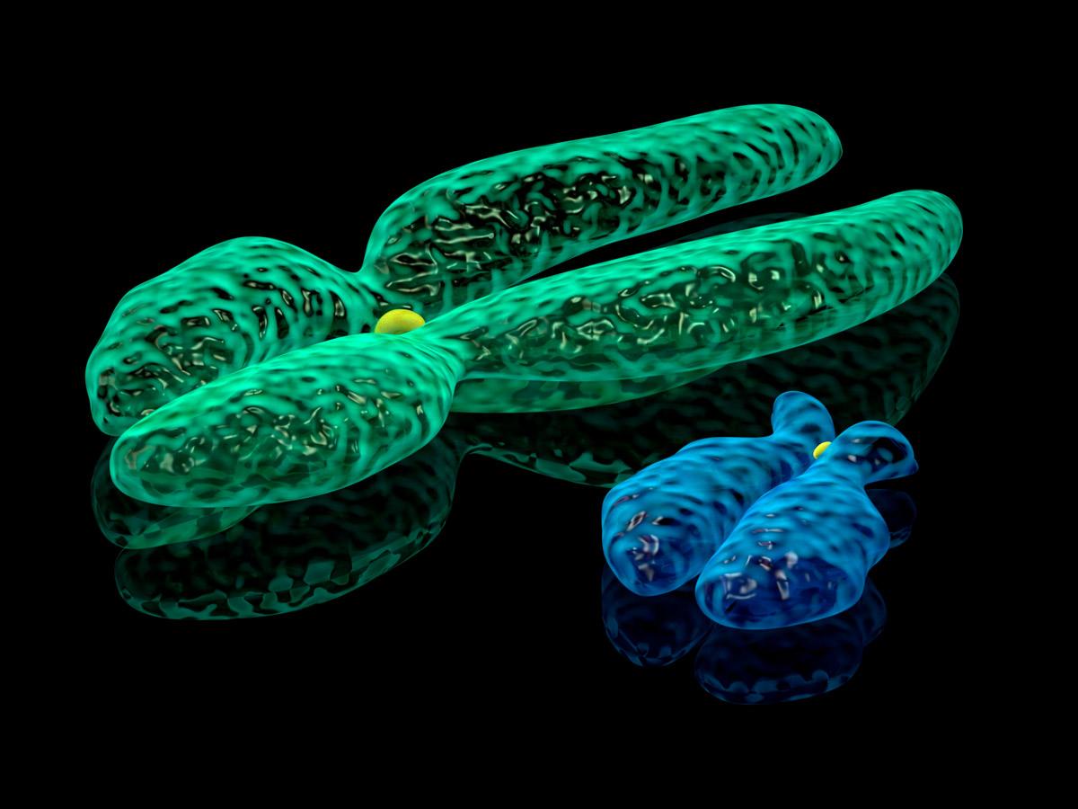 Y-хромосома исчезает: чтобудет смужчинами?