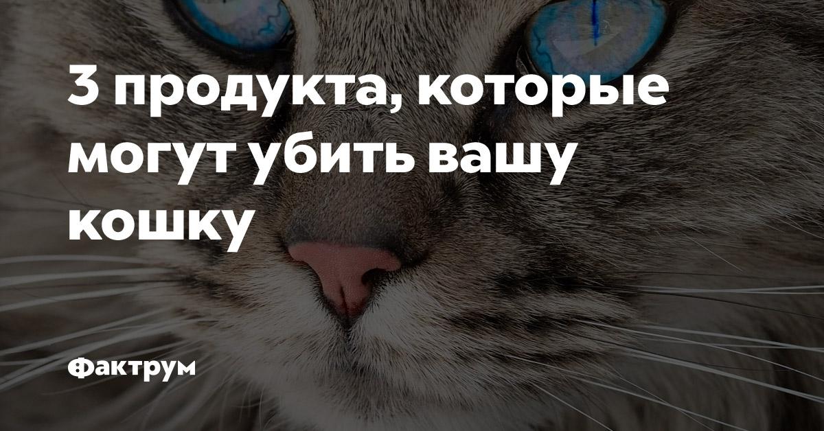 3продукта, которые могут убить вашу кошку