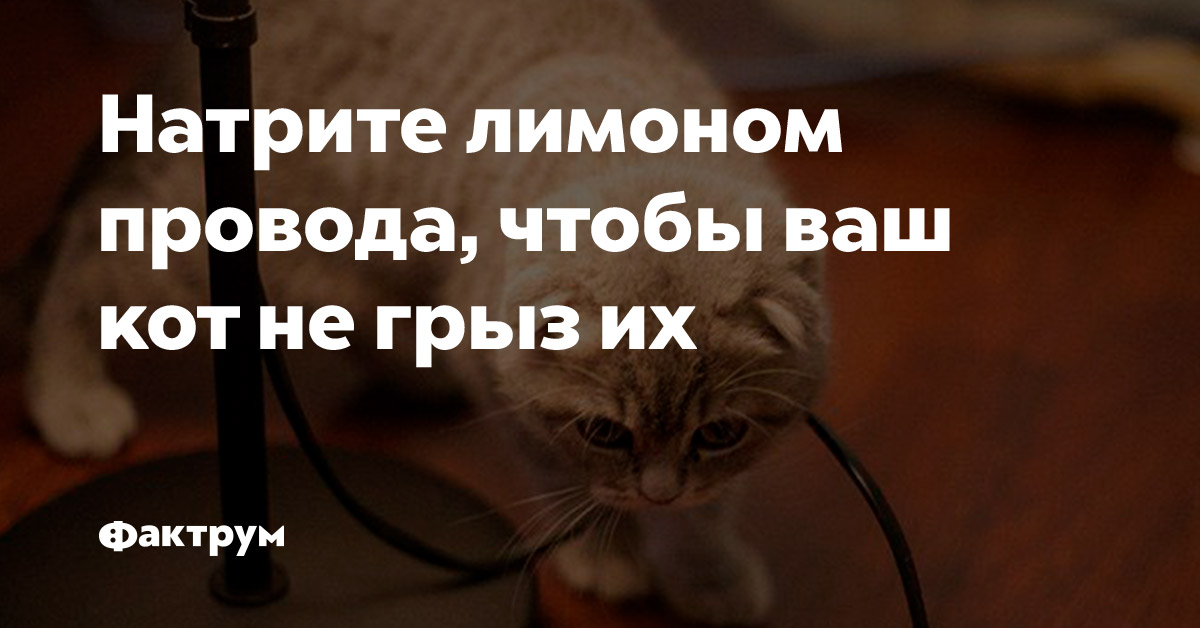 Натрите лимоном провода, чтобы ваш кот негрызих