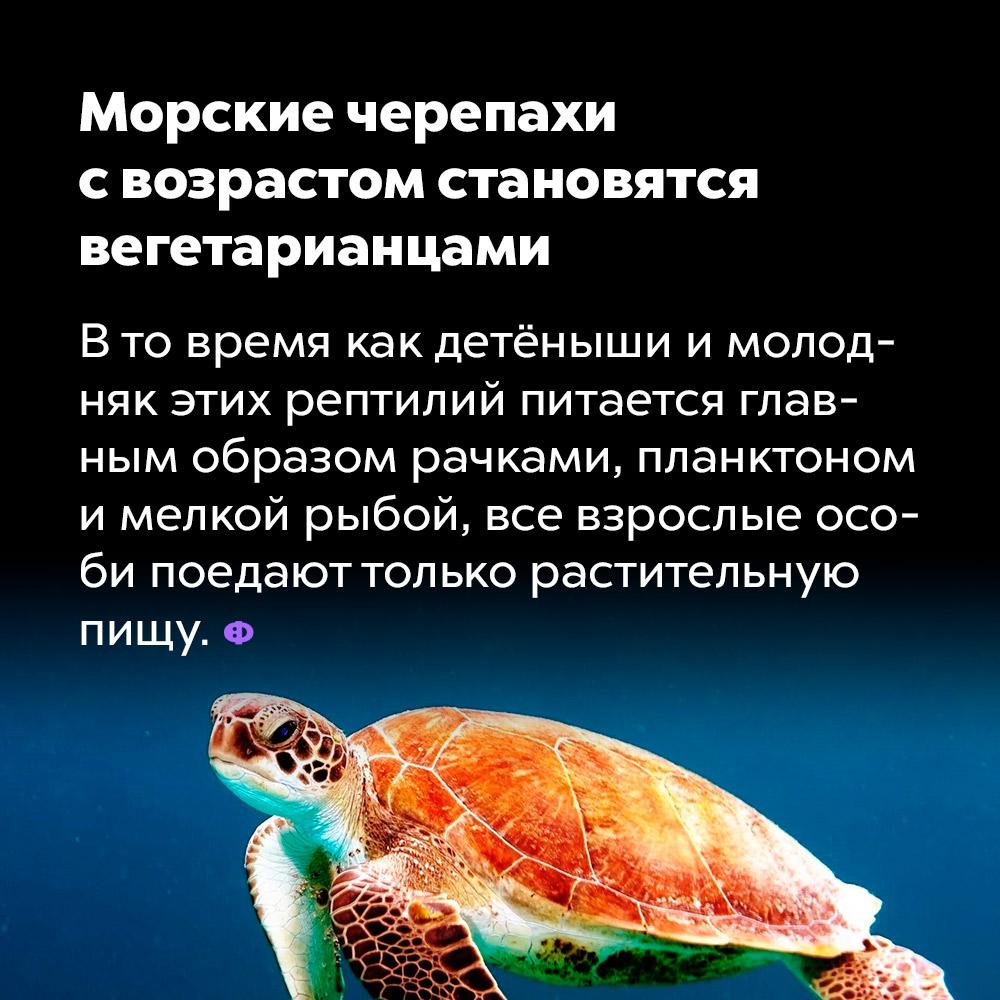 Морские черепахи свозрастом становятся вегетарианцами. В то время как детёныши и молодняк этих рептилий питается, главным образом, рачками, планктоном и мелкой рыбой, все взрослые особи поедают только растительную пищу.